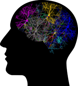 Connections in brain